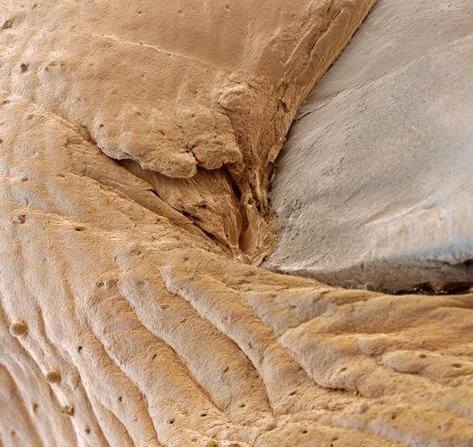 2 human nail macro shot