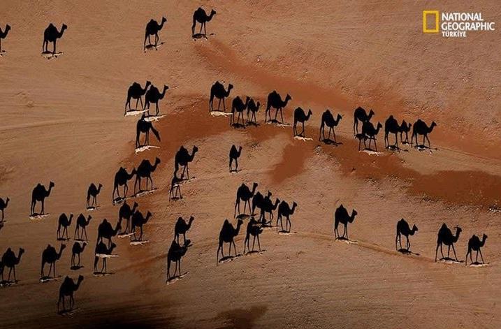 camel shadow illusion