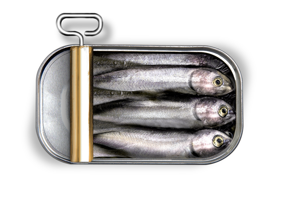 cans of unopened fish