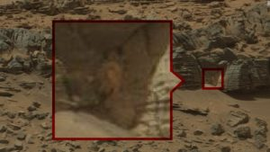 What's this crab doing on Mars?