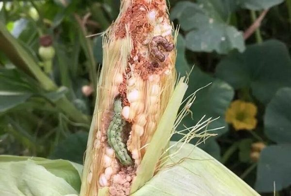 A Rational Look at GMOs:  Facts, Fiction, and Fear Mongering