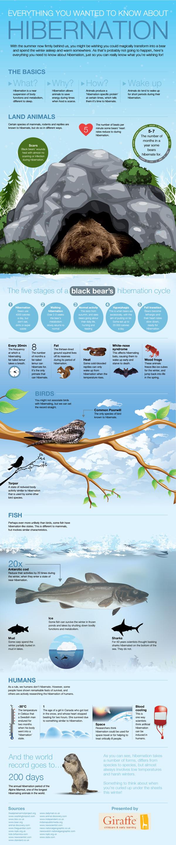 hibernation explained infographic 600w