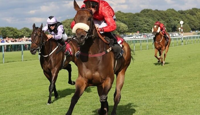 Is There Really a 'System' in Horse Racing Betting?