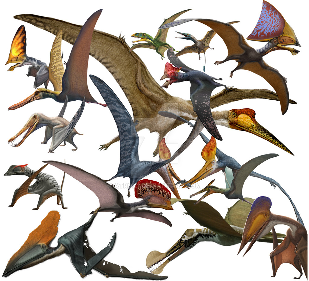 Pterosaurs in Flight