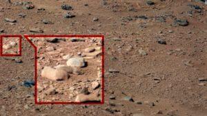 Did Curiosity find a rat on Mars?