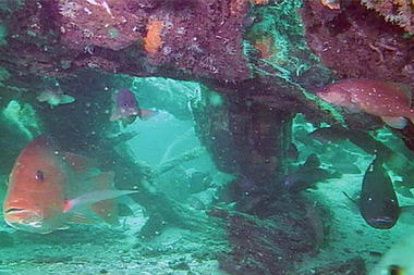 underwater-forest-cyprus-trees