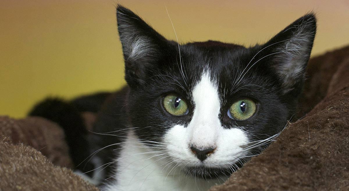 vet diagnoses cat's rare condition