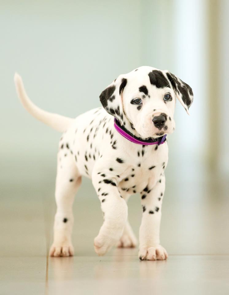 She won Best Dog of Breed