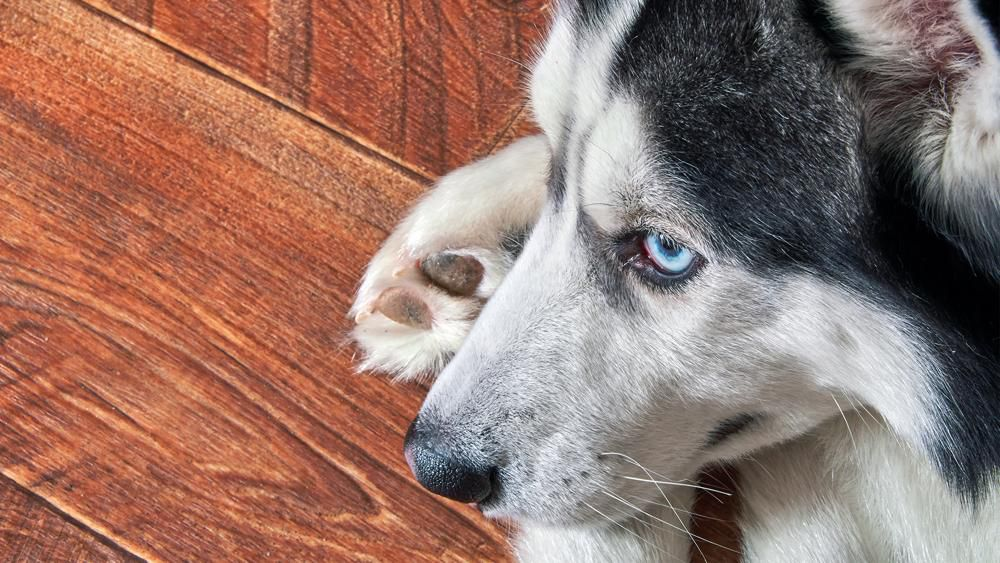 the dog knew she had cancer
