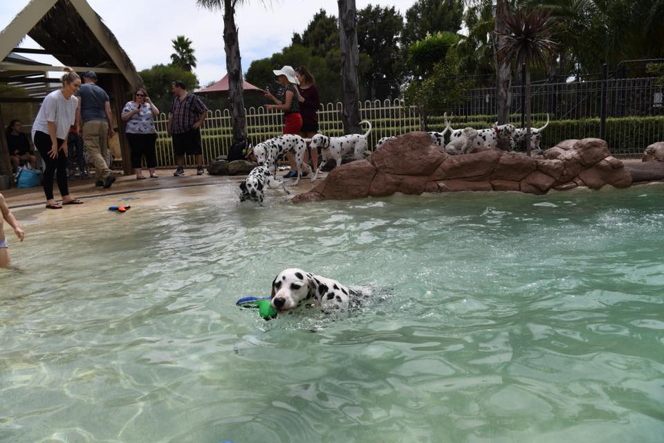 CCDalmations dog breeder