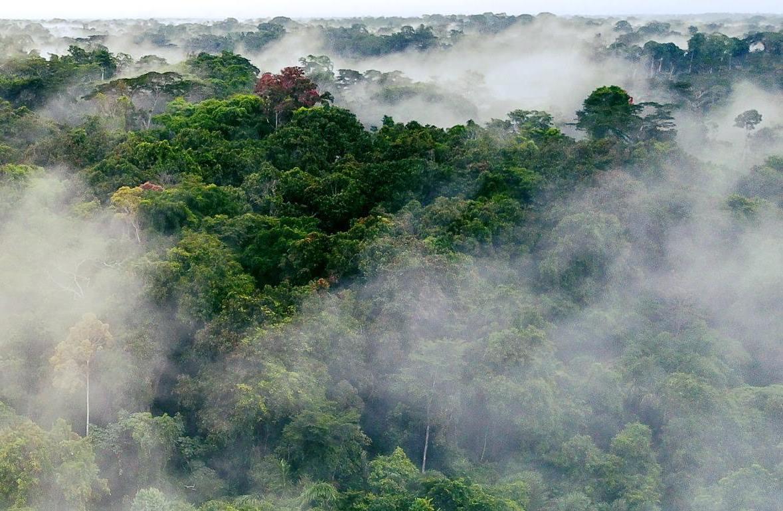 The gorilla habitat