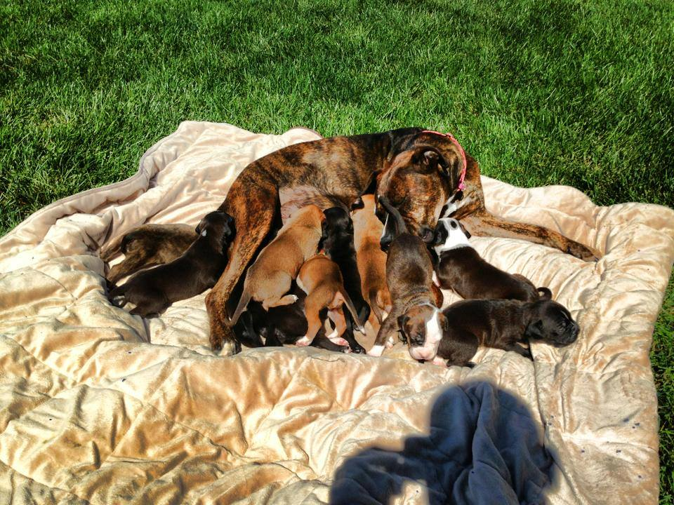 Storie the dog with her pups