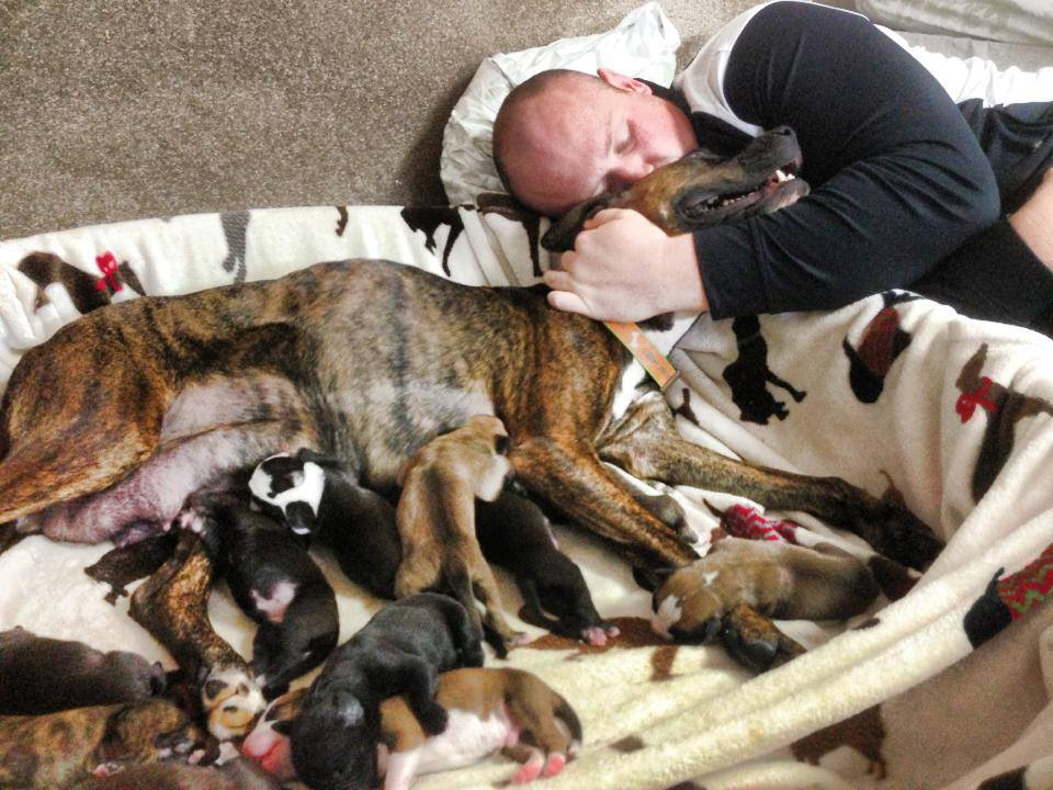 supporting dogs in shelters