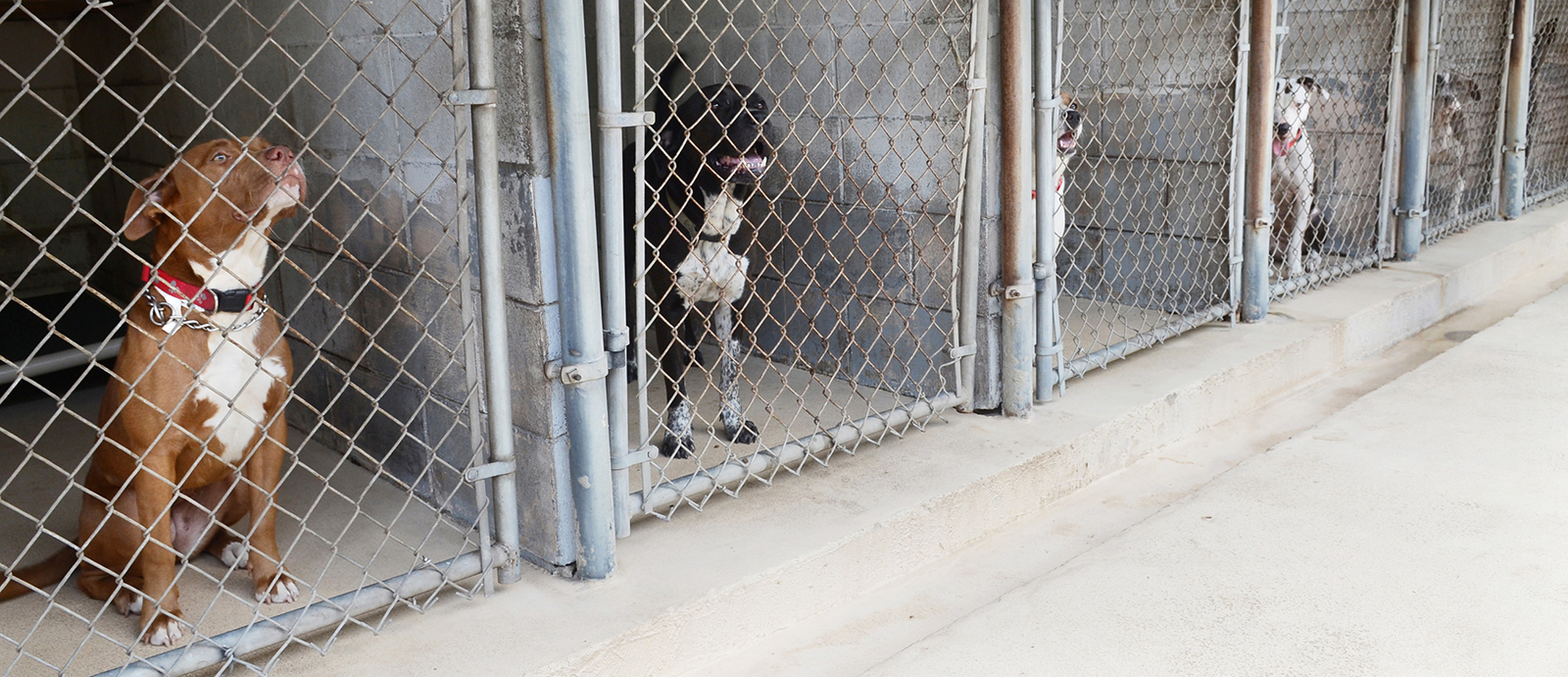 rescuing a dog from a shelter
