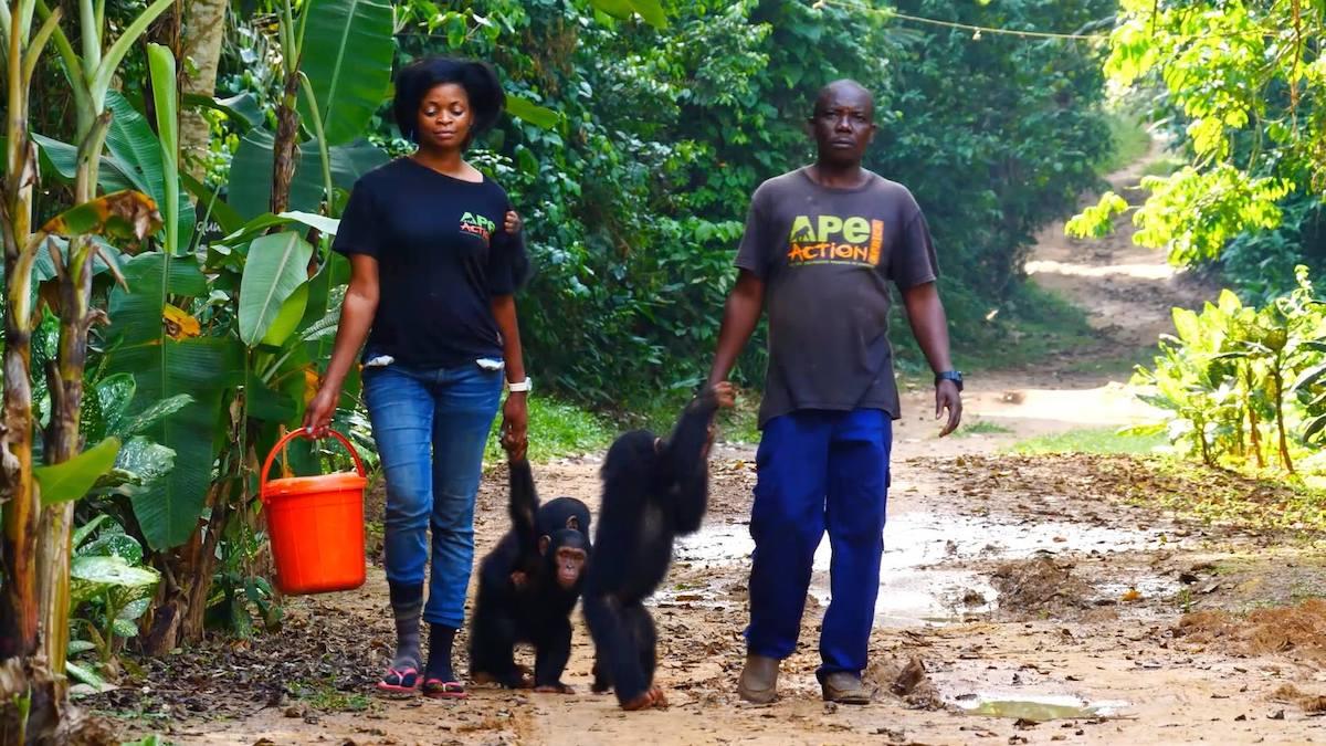 gorilla rescue center