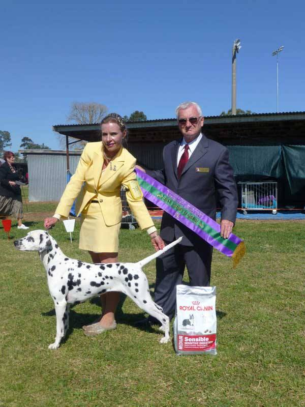 an exceptional show dog