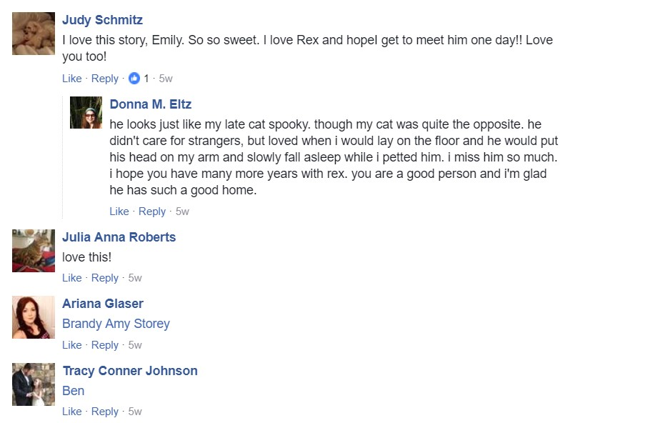 people respond to Rex the cat's story
