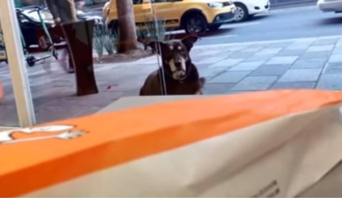 hungry dog outside pizza shop
