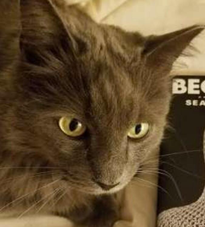 Rex Manning the indoor cat