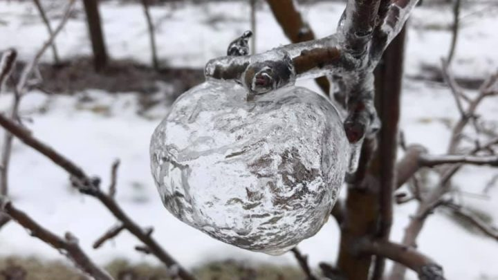 (Possibly) Never Before Seen Ghost Apple Phenomenon Stuns The World