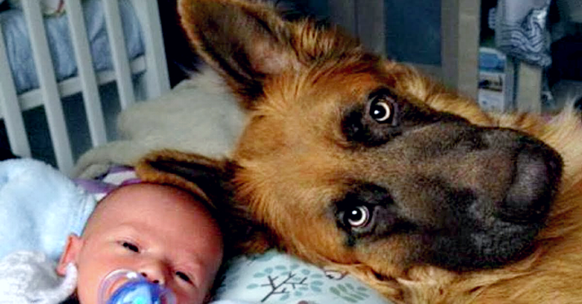 Dog Protects Baby From Babysitter's Singing Voice
