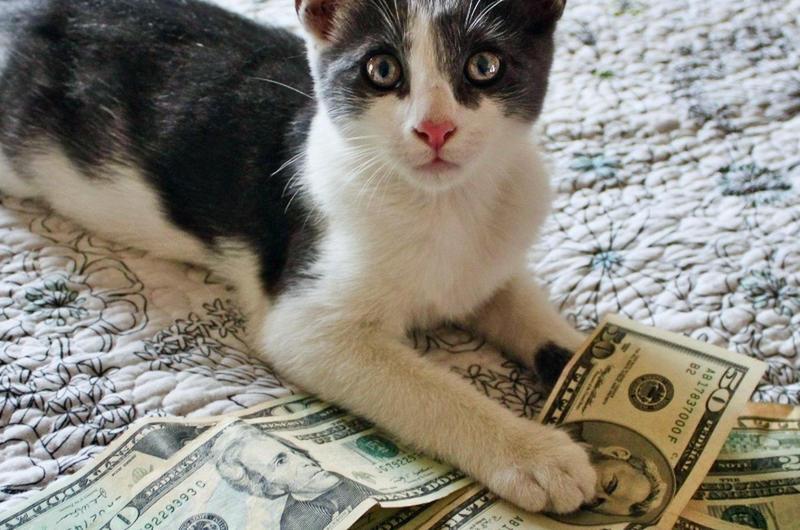 Cat Keeps Bringing Money, So Dad Sets Up Camera