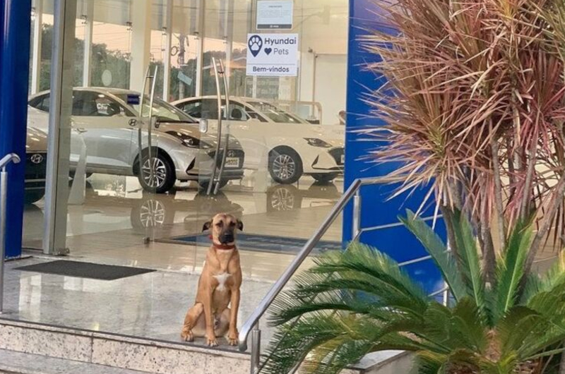 Animal Won't Budge From Spot, Car Dealer Looks In Trunk